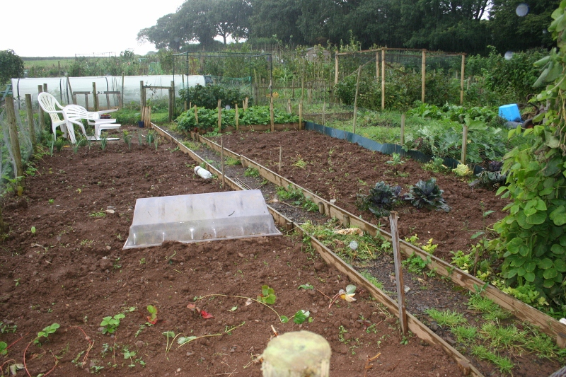 Allotment Cleared Photo