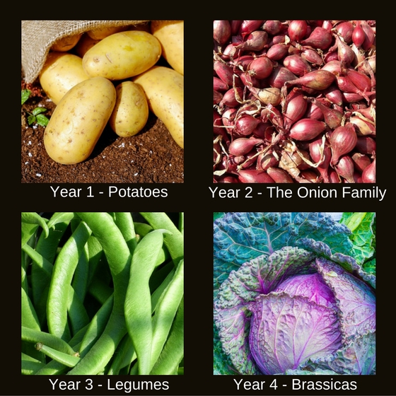 A 4 year crop rotation