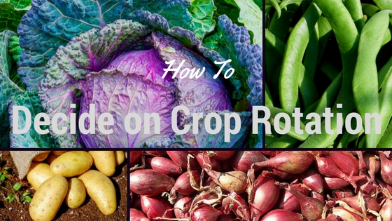 How To Decide on a Simple Vegetable Crop Rotation