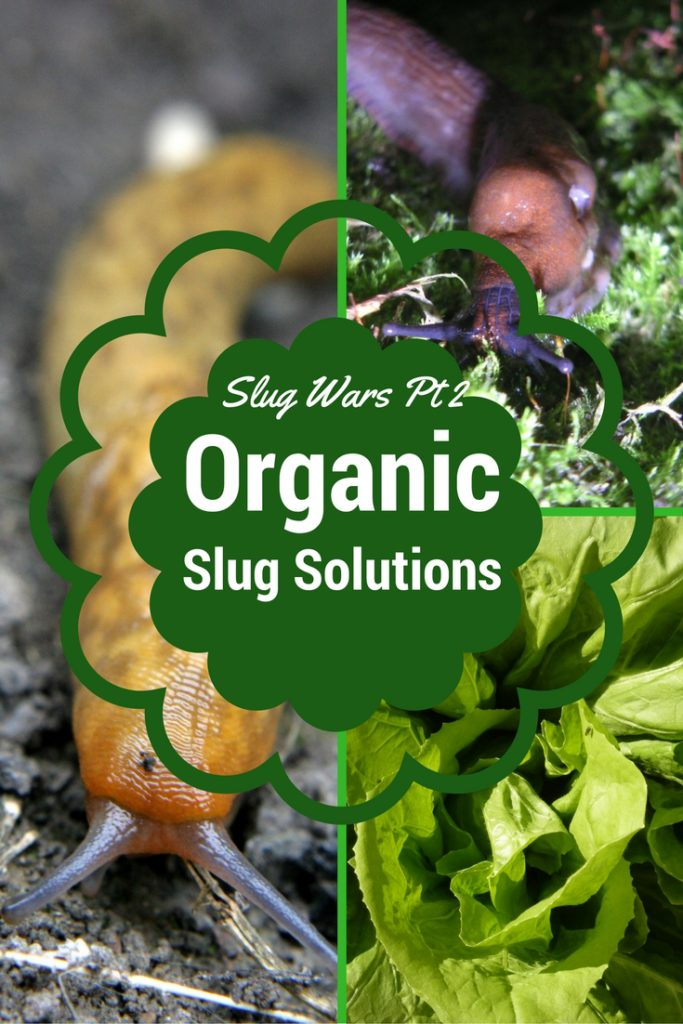 how to kill slugs organically
