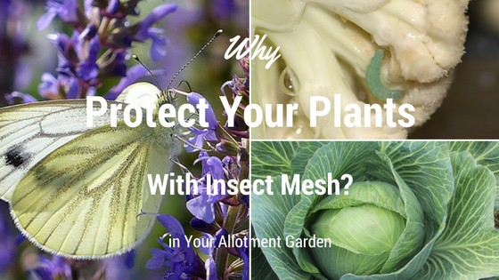 Why Protect Your Plants with Insect Mesh?