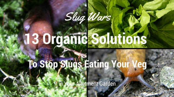 13 Organic Solutions to Stop Slugs Eating Your Vegetables