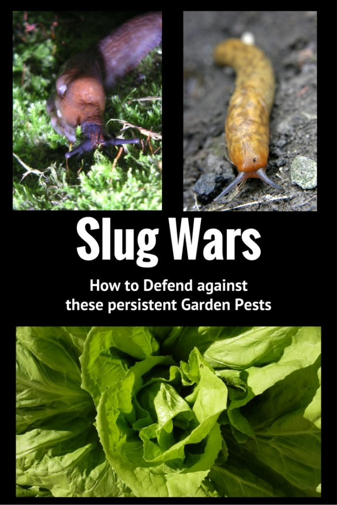 how-to-kill-slugs