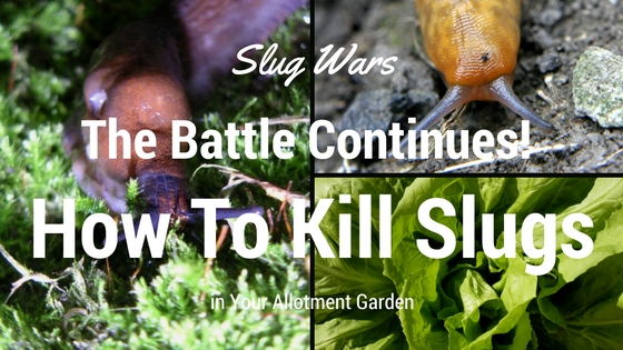 Slug Wars The Battle Continues How To Kill Slugs