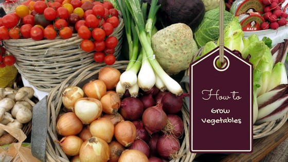 How to Grow Vegetables Successfully