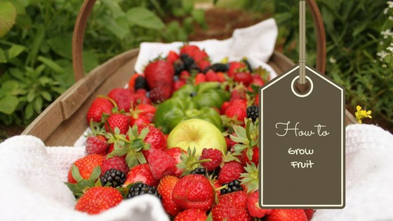 How to Grow Fruit Successfully